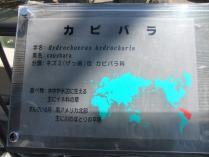 DSCF3284 (800x600)