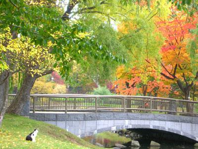 中島公園の紅葉2