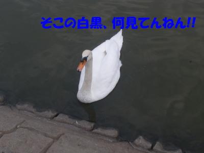 PB090028.jpg