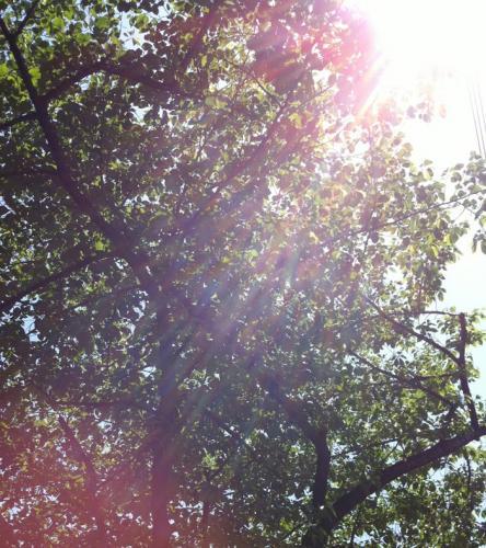 暖かい日、散歩日和。