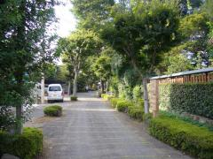 盆栽村04