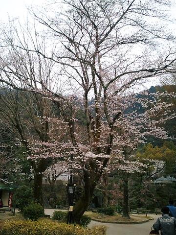 2011-04-02_17_14_12.jpg