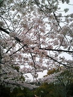 2011-04-10_17_07_38.jpg