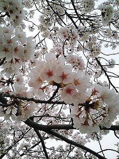 2011-04-10_17_07_58.jpg