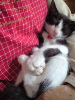 眠いよ~と抱っこをせがむo(^-^)oぼたん