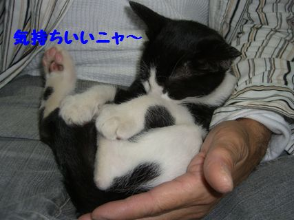 CIMG3684-12-01おまけ-おまけ