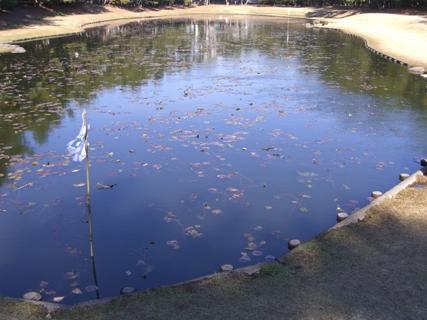 みそぎの池