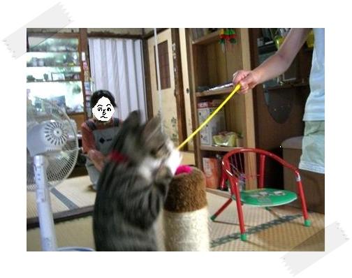 蘭丸お姉ちゃんと遊ぼ!