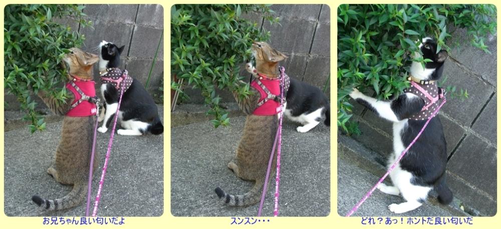 お散歩④ -tile