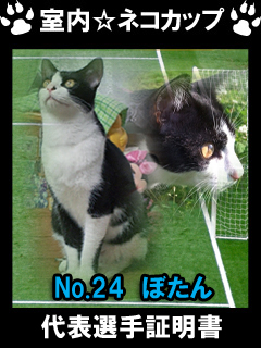 室内☆ネコカップ No24ぼたん-1