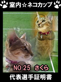 室内☆ネコカップ No25さくら-1