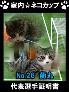 室内☆ネコカップ No26蘭丸-1