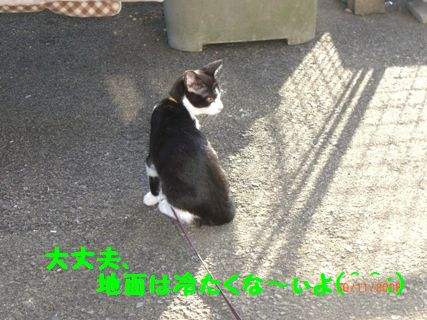 CIMG1379-11-30_20091130223127.jpg