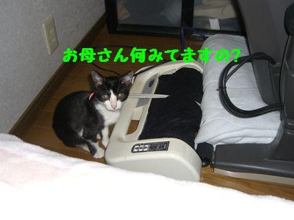 CIMG3616-11-27_20091127173609.jpg