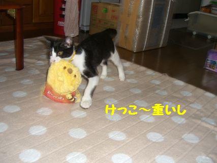CIMG3705-12-03-2.jpg