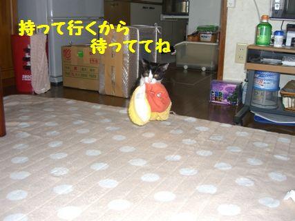CIMG3709-12-03-01.jpg