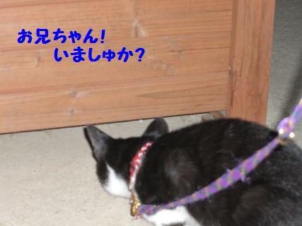 CIMG3731-12-01-1_20091202012933.jpg
