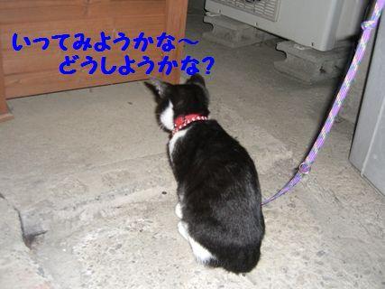 CIMG3733-12-01-2.jpg