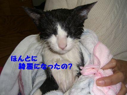 CIMG3768-12-04-1.jpg