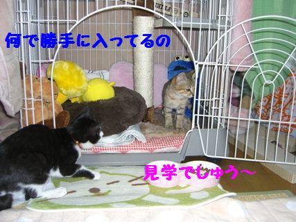 CIMG3852-1_20091208164131.jpg