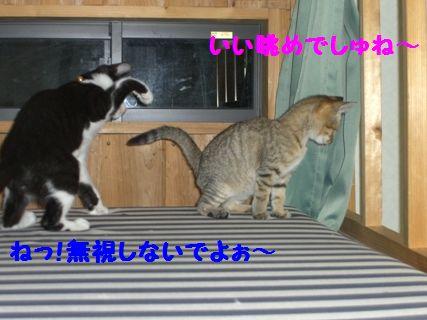 CIMG3859-1_20091208164757.jpg