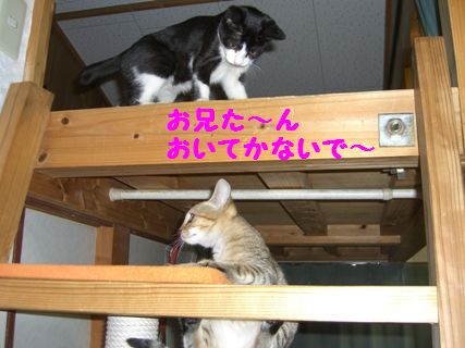 CIMG3868-1_20091208164811.jpg