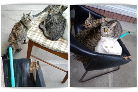 cats_20100420201238.jpg