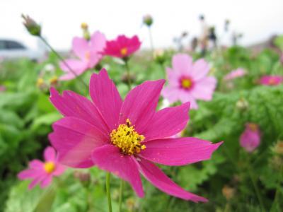 2009_11_1_荒川ふれあい祭り+001_convert_20091103000200