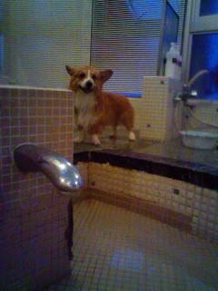 犬用の浴槽。
