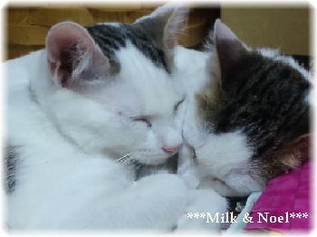 milk-noel5.jpg