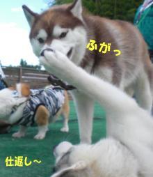 かあちゃん遊ぼっ!