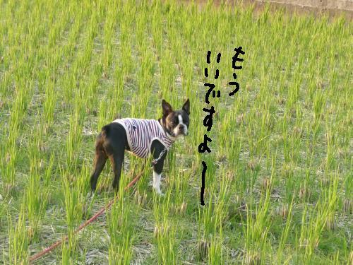 P1040897_convert_20091108210405.jpg