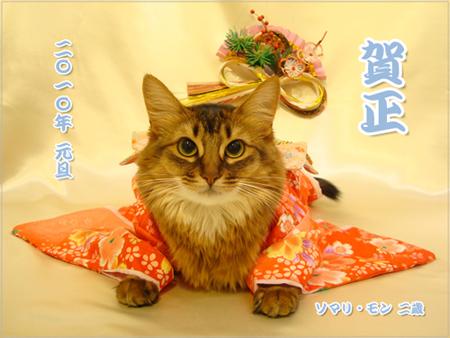 猫着物.jpg