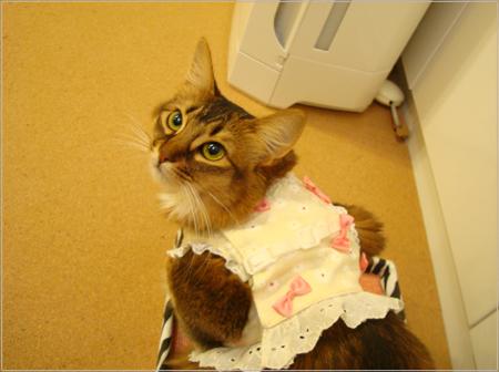 猫ハーネス.jpg