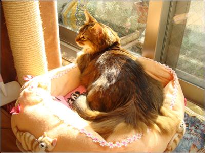 リメイク猫ベットで可愛く