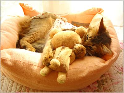 術後服着て猫ベットでゴロゴロ