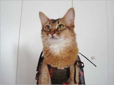 ギャル猫モンさん.jpg
