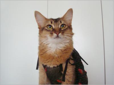 age嬢猫のモンさん.jpg