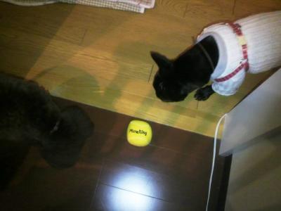 ボール、どっちの権利かな?