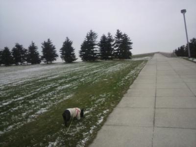 今日の散歩コース