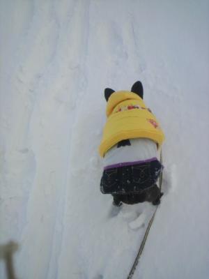 新雪はジックリ踏みしめて