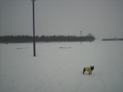 いつのまにかの雪景色