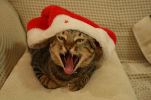 クリスマスイヤだニャ