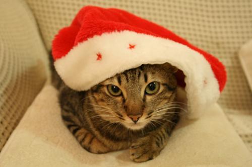 無理やりクリスマス