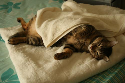 毛布をかぶる