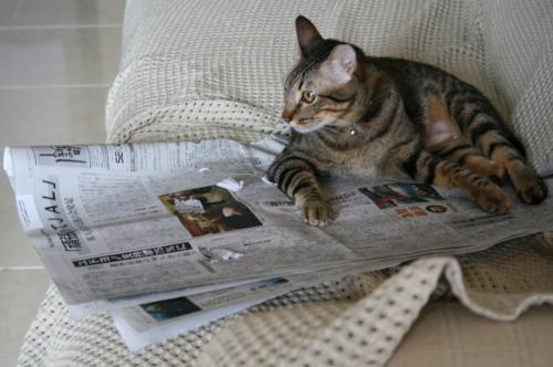 新聞を読む2
