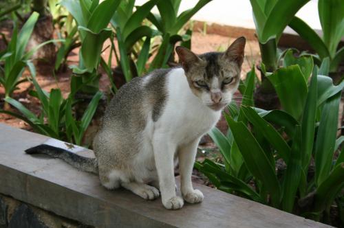 アンチョールの猫2