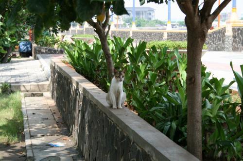 アンチョールの猫1