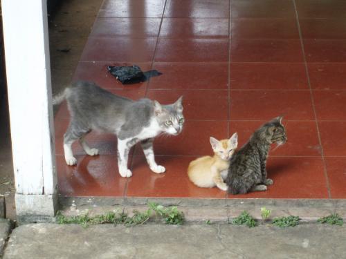 民家の猫3