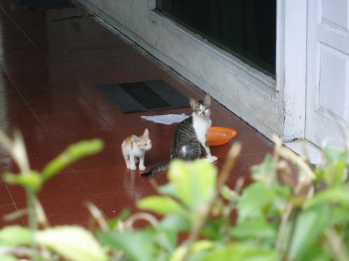民家の猫1